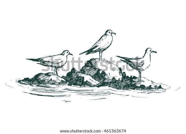 Gulls on a rock. Vector sketch.