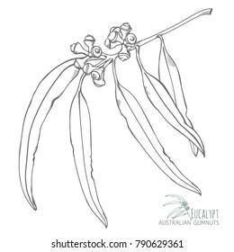 Gumnuts Natural Hand-drawn Design