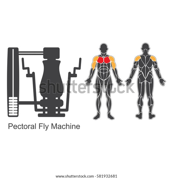 Gym machine and human muscles silhouettes isolated on white background