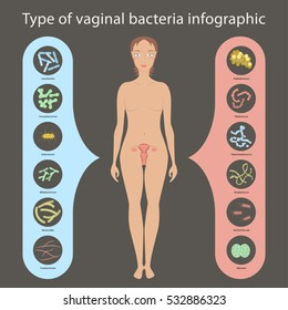 Gynecology Vector illustration. Woman's vaginal flora or microbiota in vagina, Good and Bad Bacteria