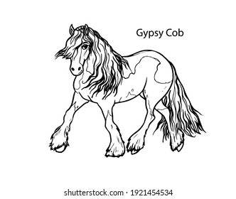 Gypsy cob. Horse pattern design. Line art style horse breed for children colored book creation.