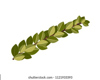 Hadas, myrtle. Illustration of a plant for the Sukkot holiday.