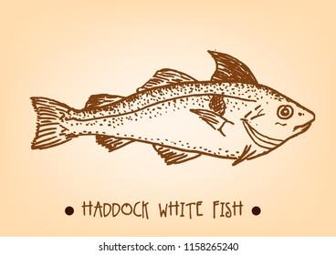 Haddock fish Hand Sketch