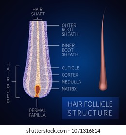 Hair bulb under the microscope. Follicle structure closeup. Removal, treatment and transplantation concept. Medical educational symbol. Body anatomy vector illustration.