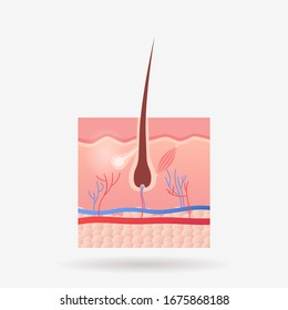 hair follicle icon human internal organ anatomy biology healthcare medical concept body system flat vector illustration