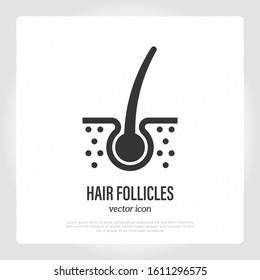 Hair follicle. Hair loss. Thin line icon. Vector illustration for medical clinic.