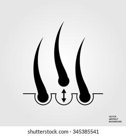 Hair transplantation, follicle, growth, treatment, root.