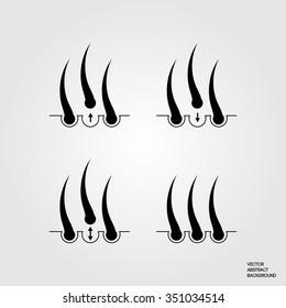 Hair transplantation. The hair follicle, Growth, Treatment, root.