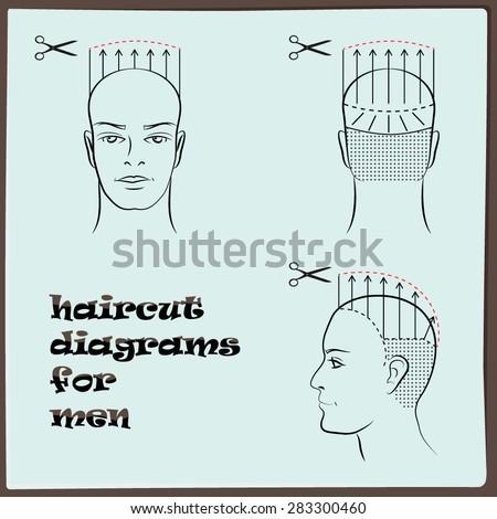Hairdressing Haircut Diagram Men Stock Vector Royalty Free