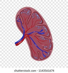 Half cut spleen icon. Realistic illustration of half cut spleen vector icon for on transparent background