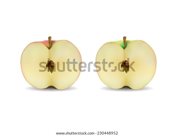 Half of red and green apple - vector