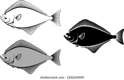 halibut - vector illustration