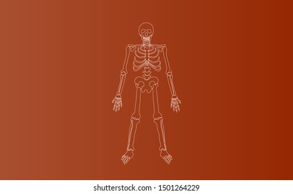 Halloween Characters of Skeleton drawing line simple.icon on brown isolate background.Creative hand sketch minimal scene place for your text.Biology body human anatomy design vector illustration EPS10