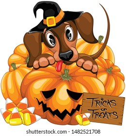 Halloween Dachshund Cute with Jack o Lantern and Candies vector illustrations