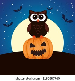 halloween owl with pumpkin on night