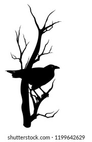 halloween theme vector silhouette design - black raven bird sitting on dry tree branch