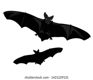 halloween vampire bat with spread wings - spooky flying animal color design and black vector silhouette