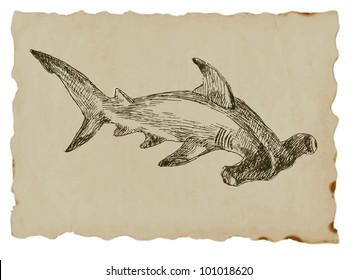 Hammer head shark - hand drawing of an animal on the brown paper.
