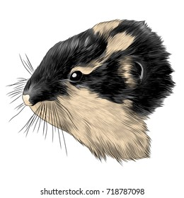 hamster, lemming head sketch vector graphics color picture