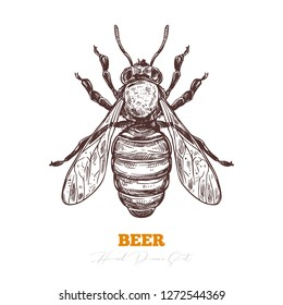 Hand darwn vector of honey bee isolated on white. Sketch engraving illustration of insect. Engraving illustration for beekeeping and apiculture farm