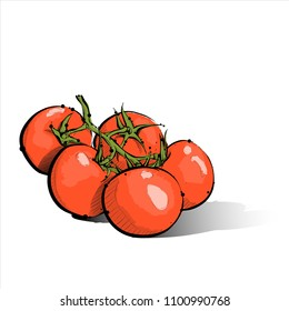 Hand draw of cherry tomato. Vector illustration.