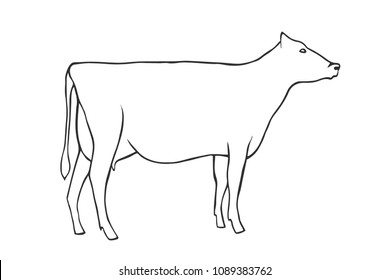 Hand Draw Cow Outline vector illustration