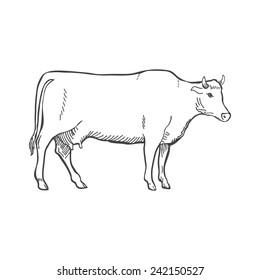 Cow Sketch Images Stock Photos Vectors Shutterstock