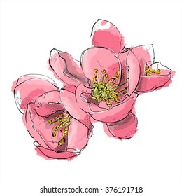 Hand draw of flower. Vector illustration.