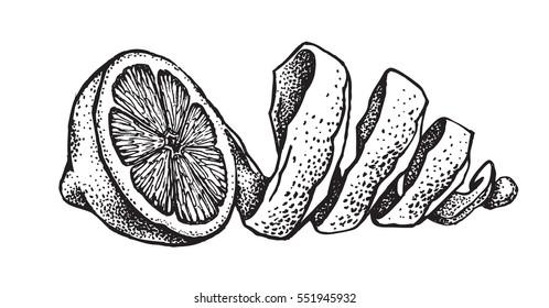 Hand draw of fresh lemon. Vector illustration.
