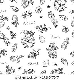 Hand draw lemon seamless pattern background wallpaper. Cute seamless pattern with lemons. Vector seamless pattern with lemon, leaves and flower. Citrus line seamless background.
