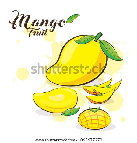 Hand Draw Mango Fruits Isolated On Stock Vector Royalty Free