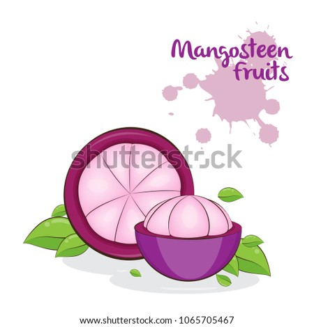 Hand Draw Mangosteen Fruits Isolated Slice Stock Vector Royalty