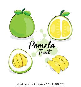 Hand Draw Pomelo Fruits Isolated On White Background. Vector Illustration.