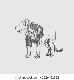 Hand draw sketch of lion - Vector