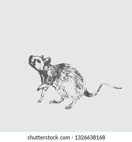 Hand draw sketch of mouse - Vector