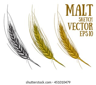 Hand draw vector sketch malt. Raw material for brewing ears of barley. Pub menu. Oktoberfest Concept with Ears of Barley.
