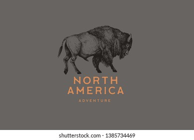 Hand drawing of American bison in retro engraving style. Buffalo in graphic vintage style. Vector logo template.