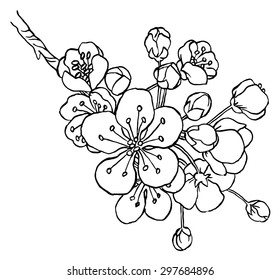 Hand drawing apple tree branch in blossom line art isolated on a white  - vector illustration