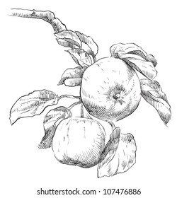 Apple Drawing Images Stock Photos Vectors Shutterstock