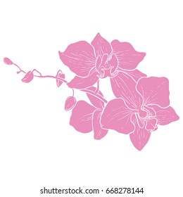 Hand drawing - branch of orchid - vector line art