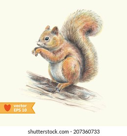 Squirrel Drawing Colour Images Stock Photos Vectors Shutterstock