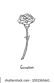 Hand drawing Carnation flowers. Line art with white background.