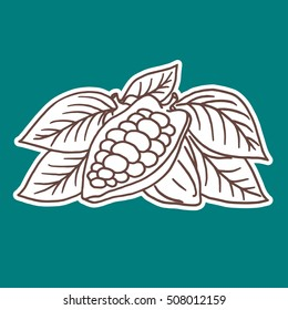 Hand drawing cocoa beans. Vector illustration