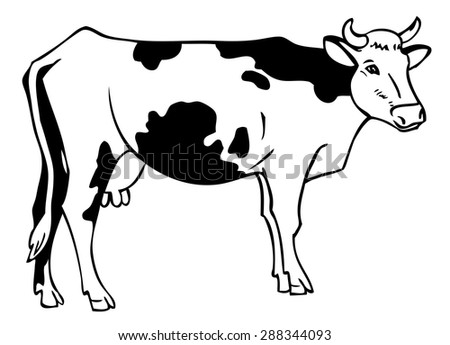 Hand Drawing Cow Spots On White Stock Vector Royalty Free