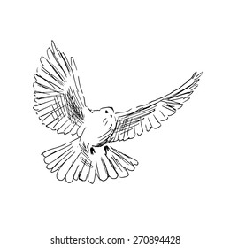 Hand drawing dove