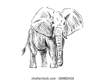 Hand drawing of an elephant. Vector illustration