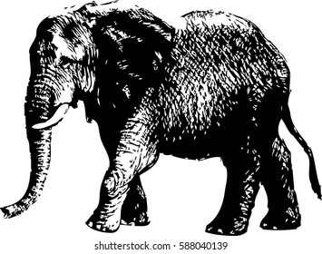 hand drawing ethnic patterned elephant on stock vector royalty free