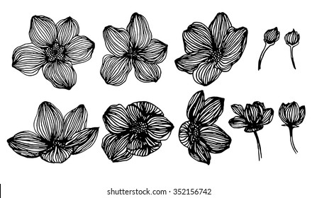 hand drawing flower on white background.
