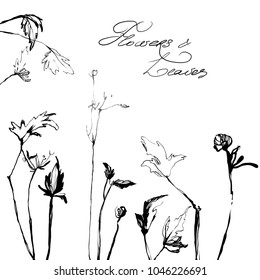 Hand drawing herbal grass. Nifty footstalk silhouette. Vintage styling gentle element for natural cosmetic design visit card or wedding invitation.  Stylish flower, fancy blossom. Black line botanica