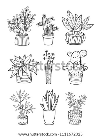 Hand Drawing Home Plants Pots Coloring Stock Vector Royalty Free